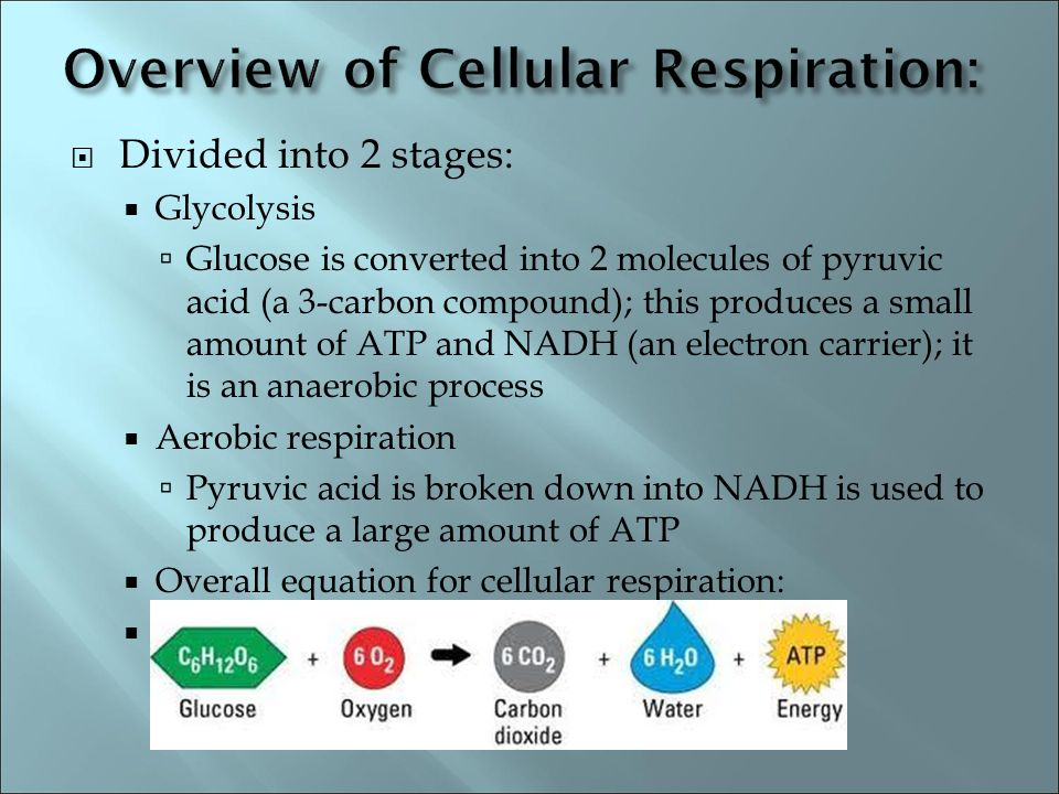 Overview of Cellular Respiration: