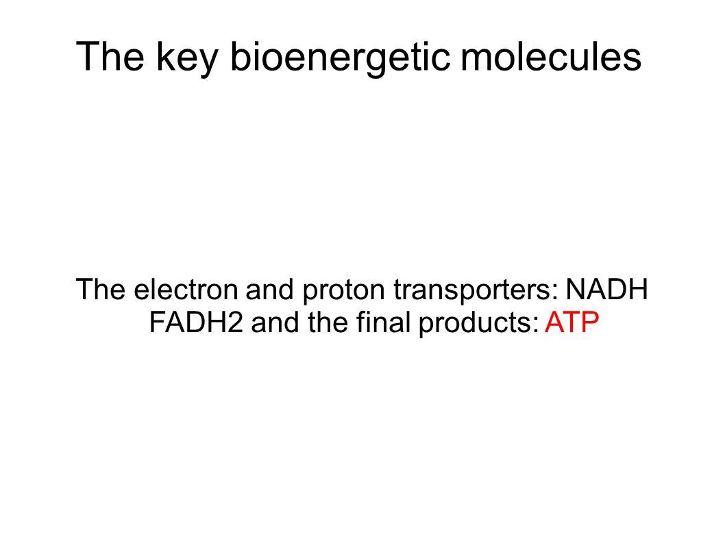 The key bioenergetic molecules