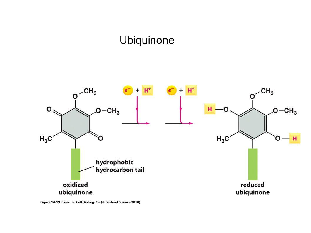Ubiquinone 36