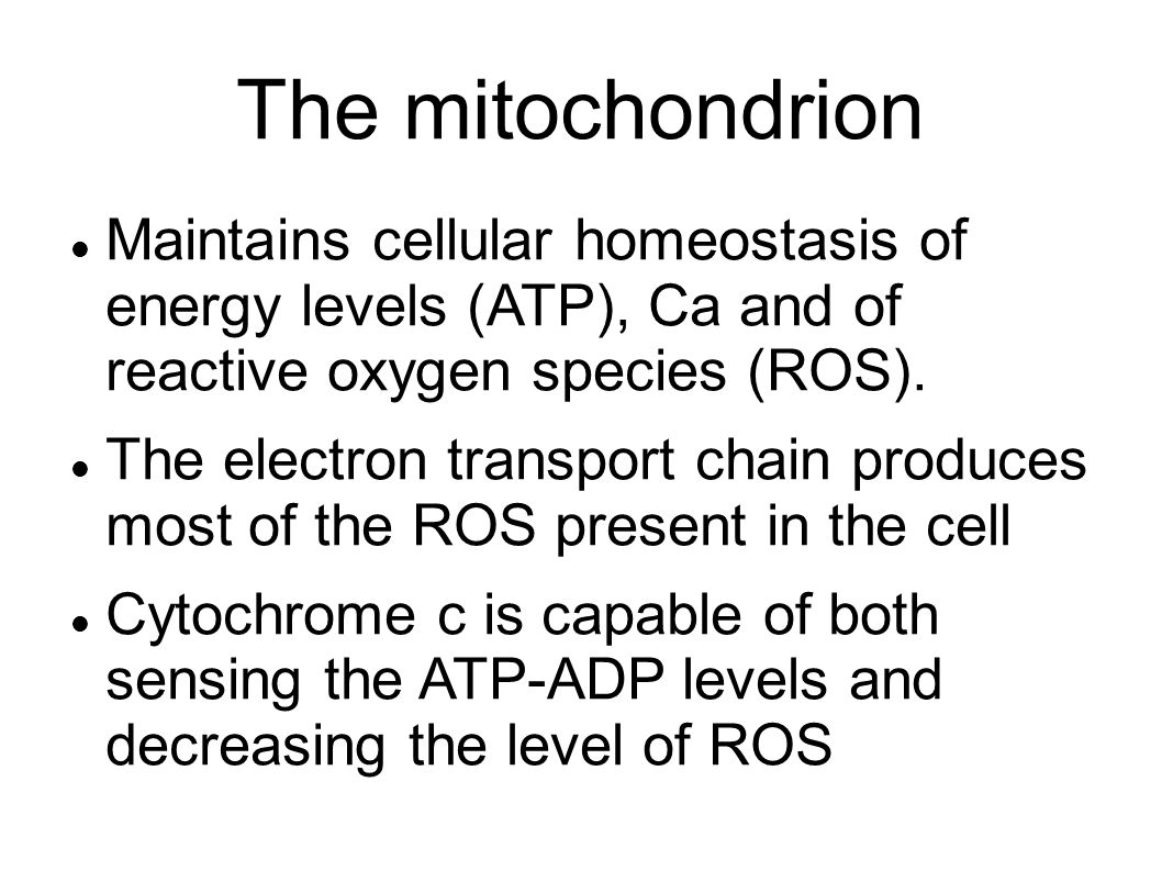 The mitochondrion Maintains cellular homeostasis of energy levels (ATP), Ca and of reactive oxygen species (ROS).