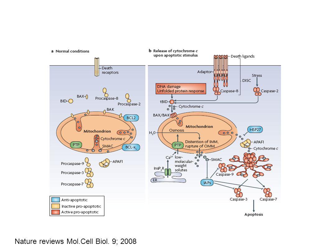 Nature reviews Mol.Cell Biol. 9; 2008