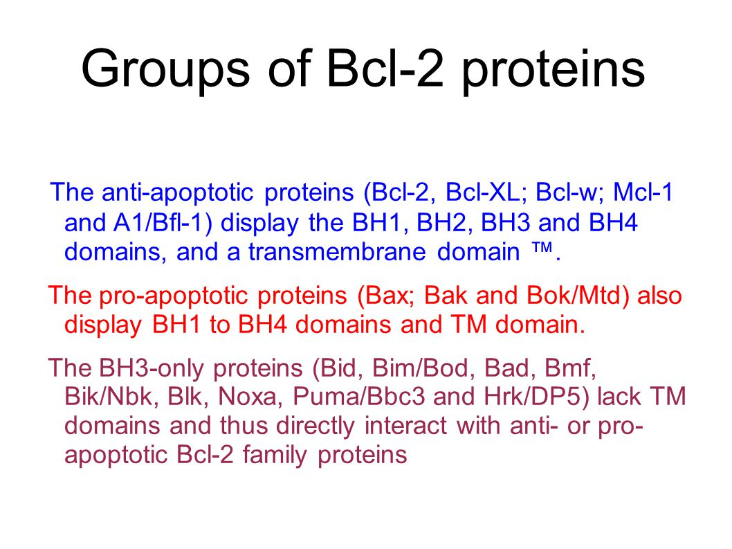 Groups of Bcl-2 proteins