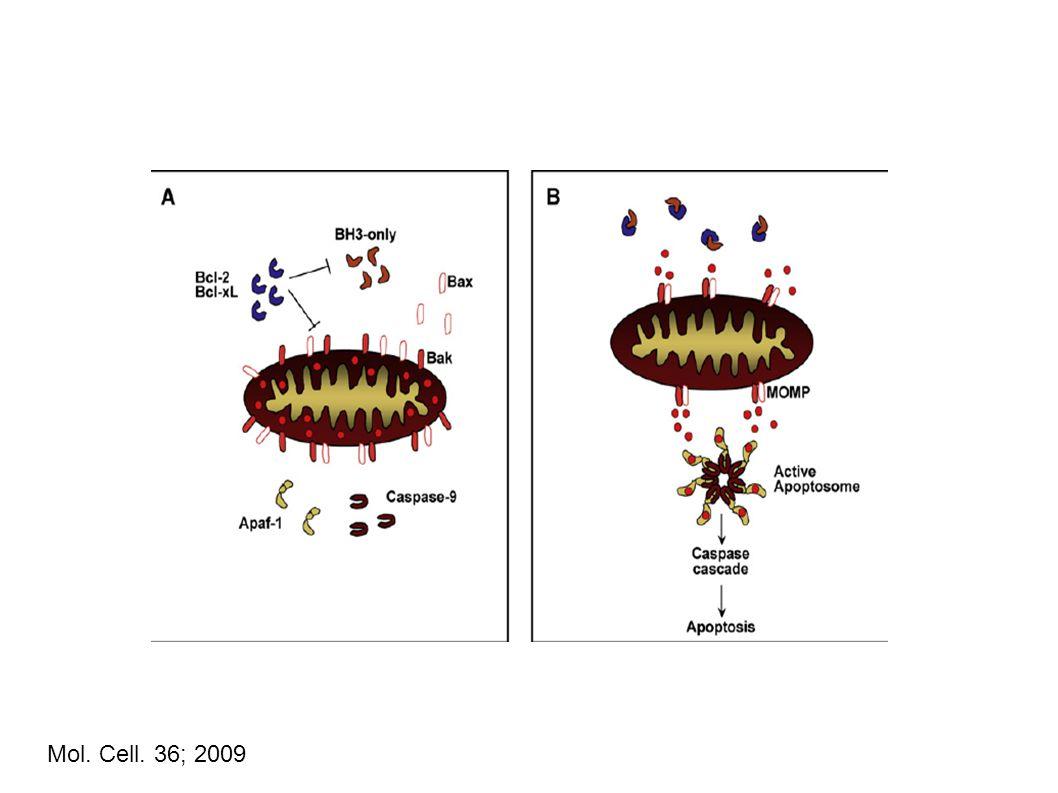 Mol. Cell. 36; 2009 63