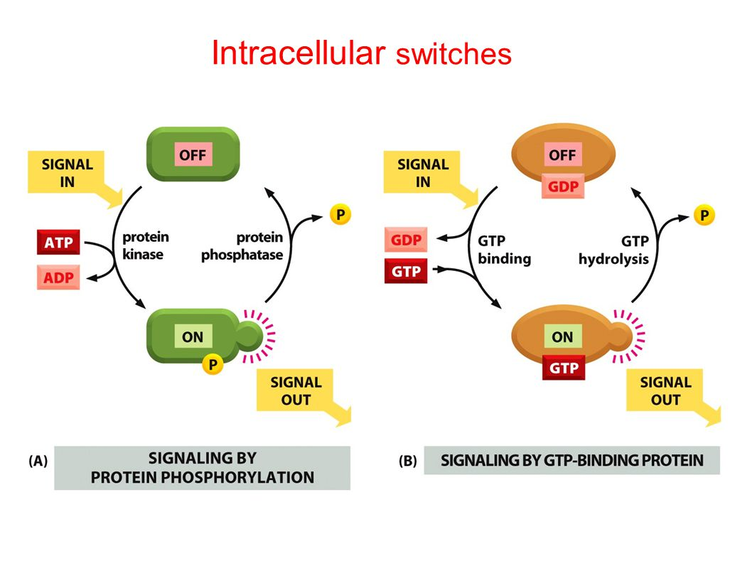 Intracellular switches