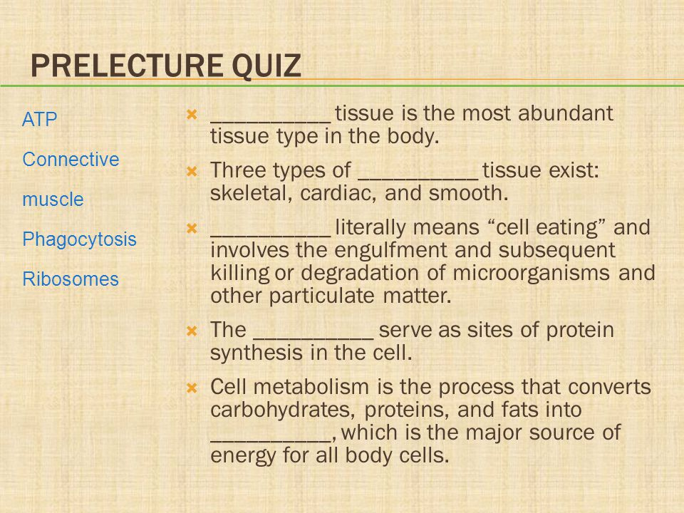 Prelecture Quiz __________ tissue is the most abundant tissue type in the body.