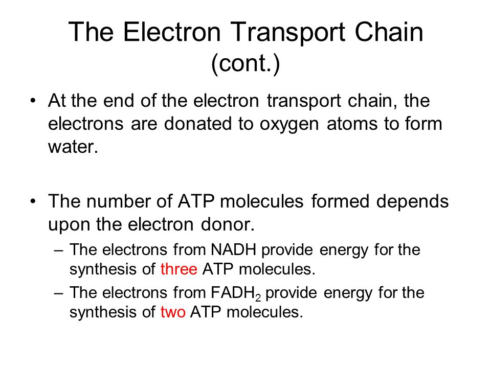 The Electron Transport Chain (cont.)