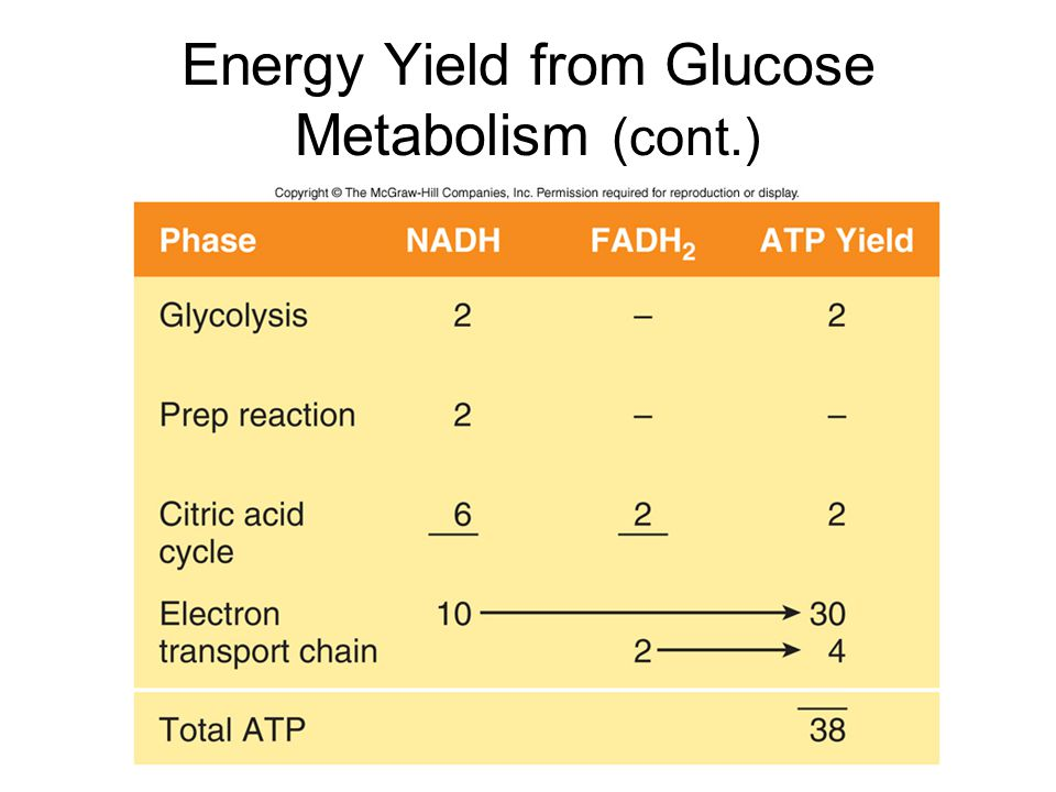 Energy Yield from Glucose Metabolism (cont.)
