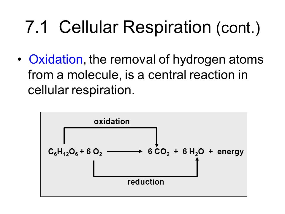 7.1 Cellular Respiration (cont.)