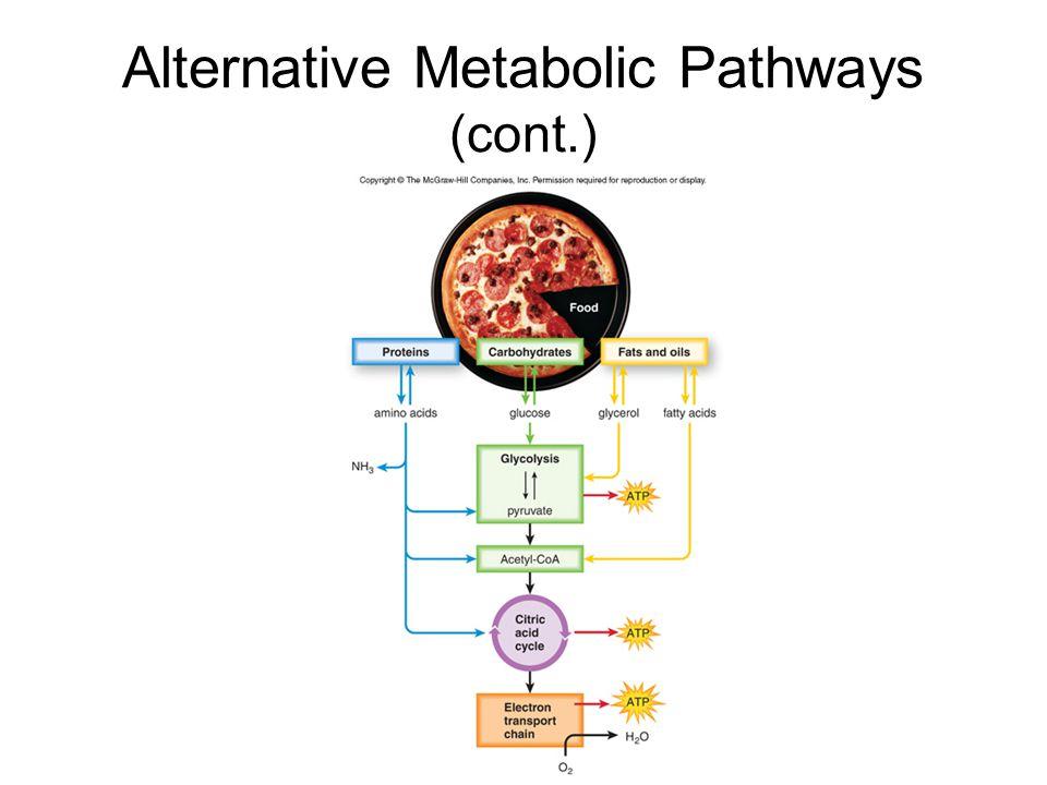 Alternative Metabolic Pathways (cont.)