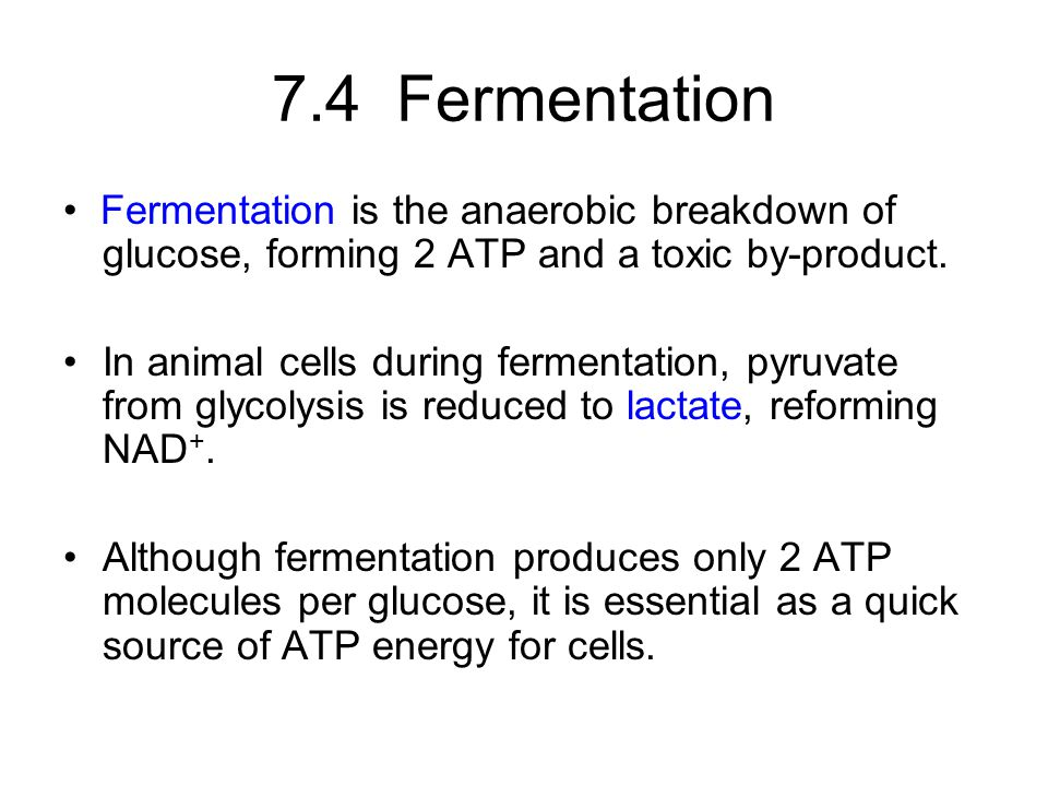 7.4 Fermentation • Fermentation is the anaerobic breakdown of glucose, forming 2 ATP and a toxic by-product.