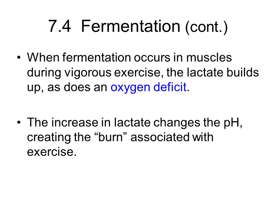 7.4 Fermentation (cont.) When fermentation occurs in muscles during vigorous exercise, the lactate builds up, as does an oxygen deficit.