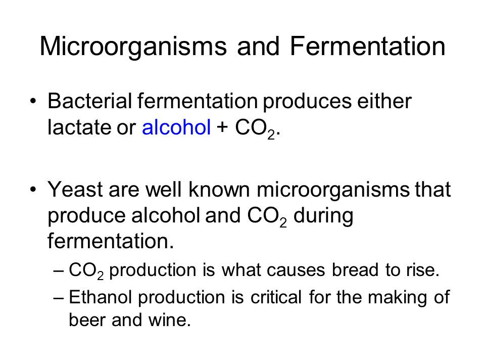 Microorganisms and Fermentation