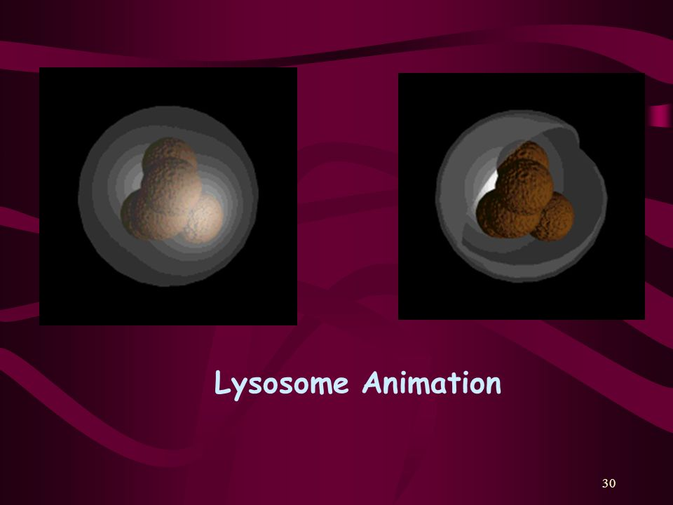 http://personal.tmlp.com/Jimr57/textbook/chapter3/cyto1d.htm Lysosome Animation