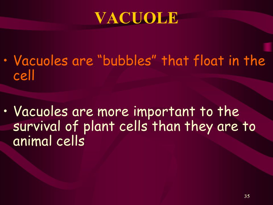 VACUOLE Vacuoles are bubbles that float in the cell