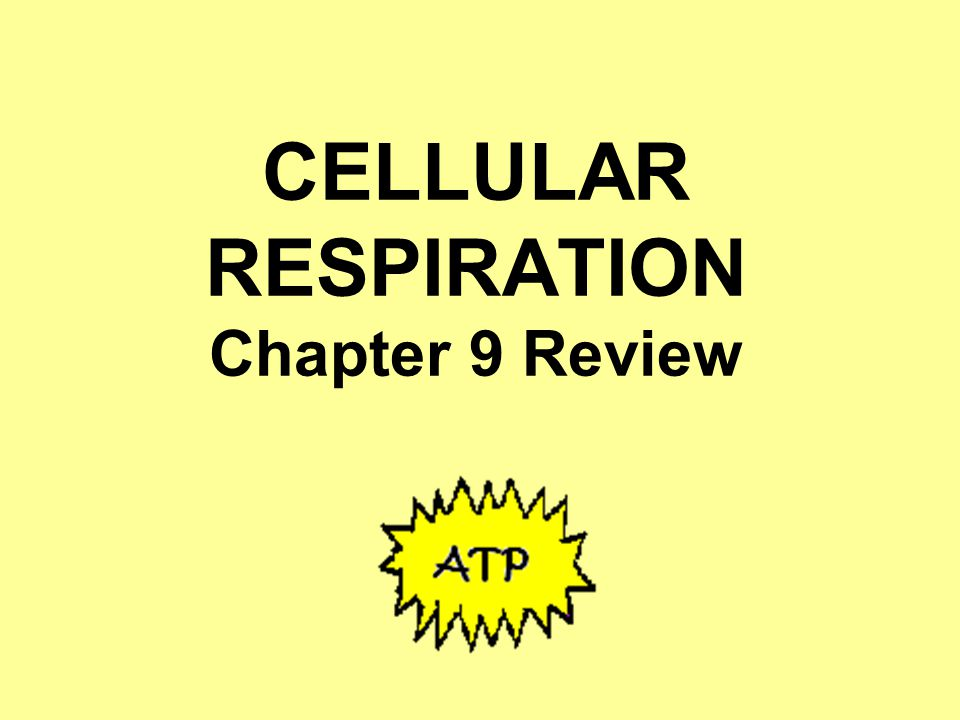 CELLULAR RESPIRATION Chapter 9 Review