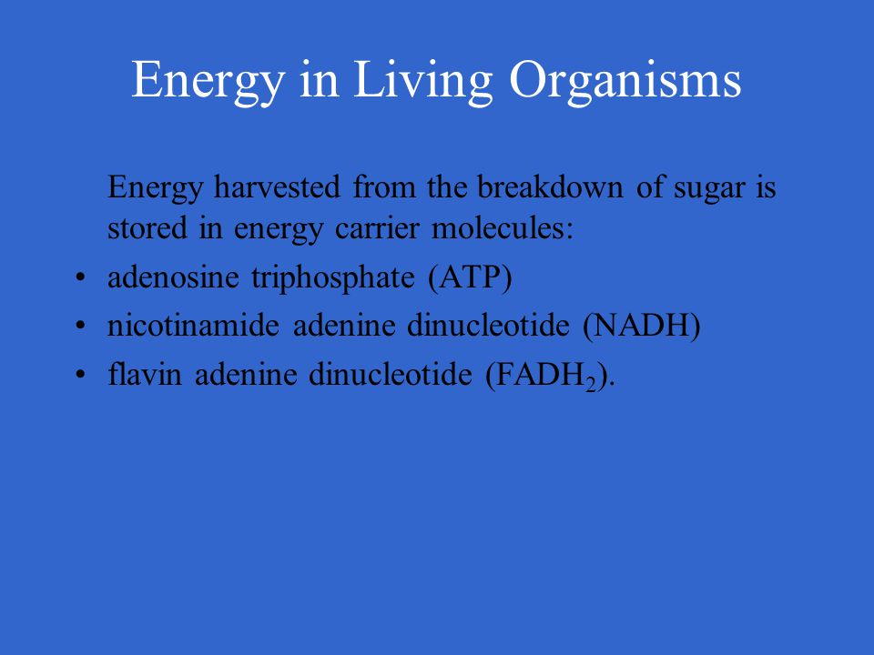 Energy in Living Organisms