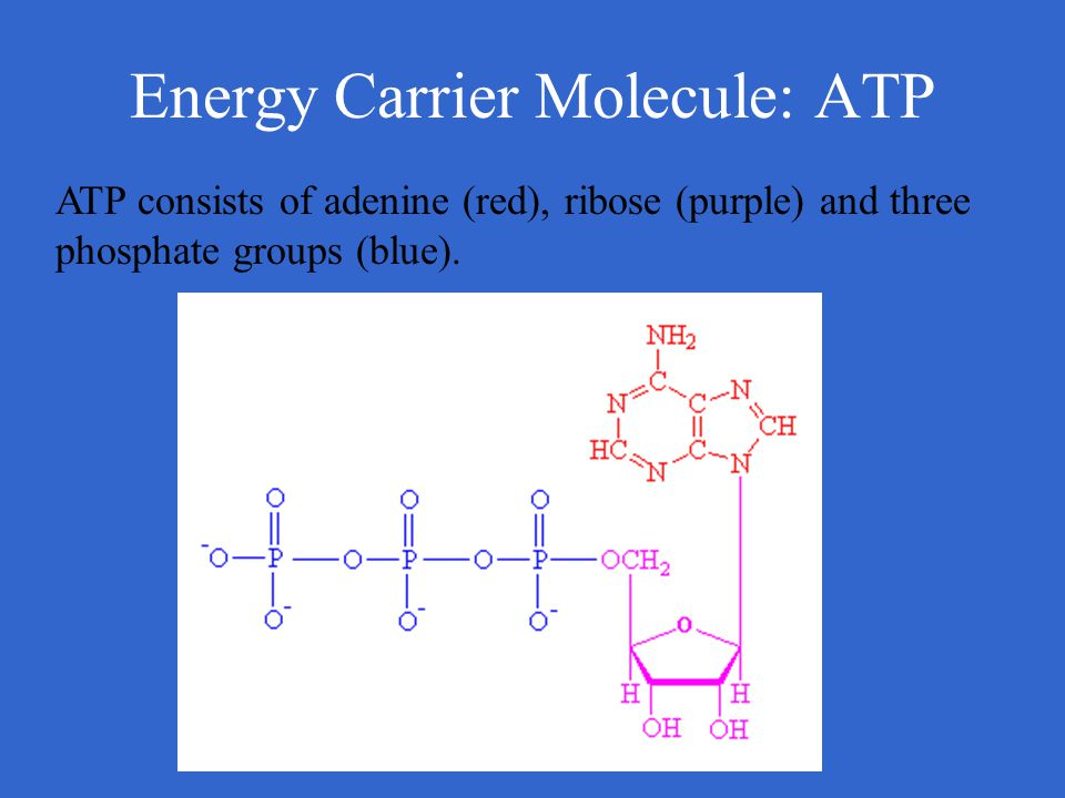 Energy Carrier Molecule: ATP