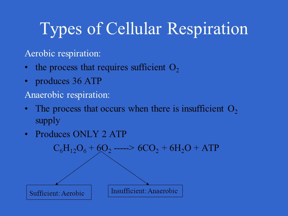 Types of Cellular Respiration