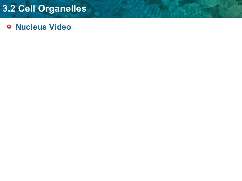 Nucleus Video