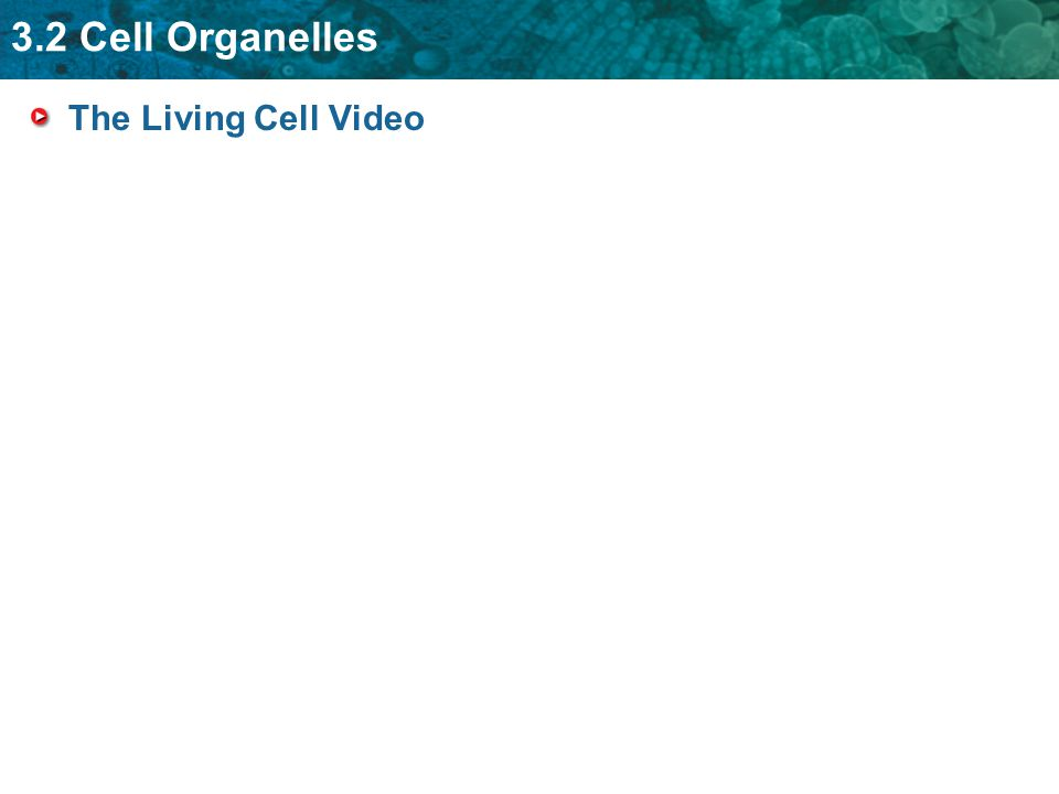 The Living Cell Video