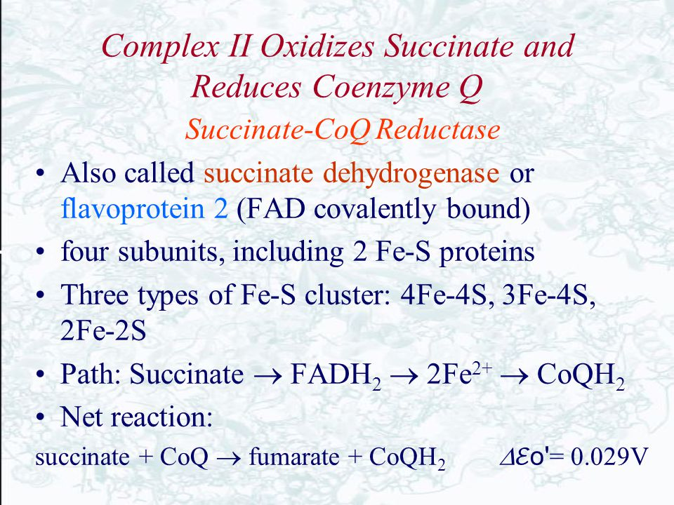 Complex II Oxidizes Succinate and Reduces Coenzyme Q