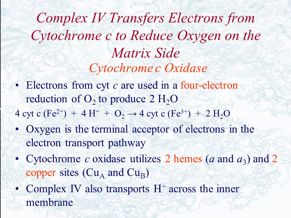 Complex IV Transfers Electrons from Cytochrome c to Reduce Oxygen on the Matrix Side