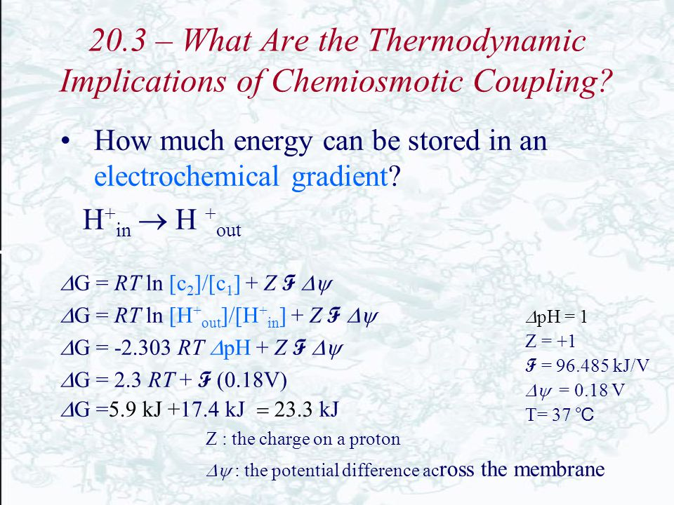 20.3 – What Are the Thermodynamic Implications of Chemiosmotic Coupling