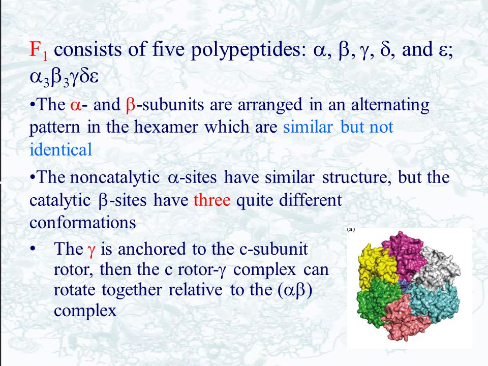 F1 consists of five polypeptides: a, b, g, d, and e; a3b3gde