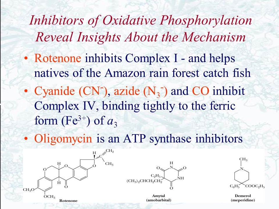 Inhibitors of Oxidative Phosphorylation Reveal Insights About the Mechanism