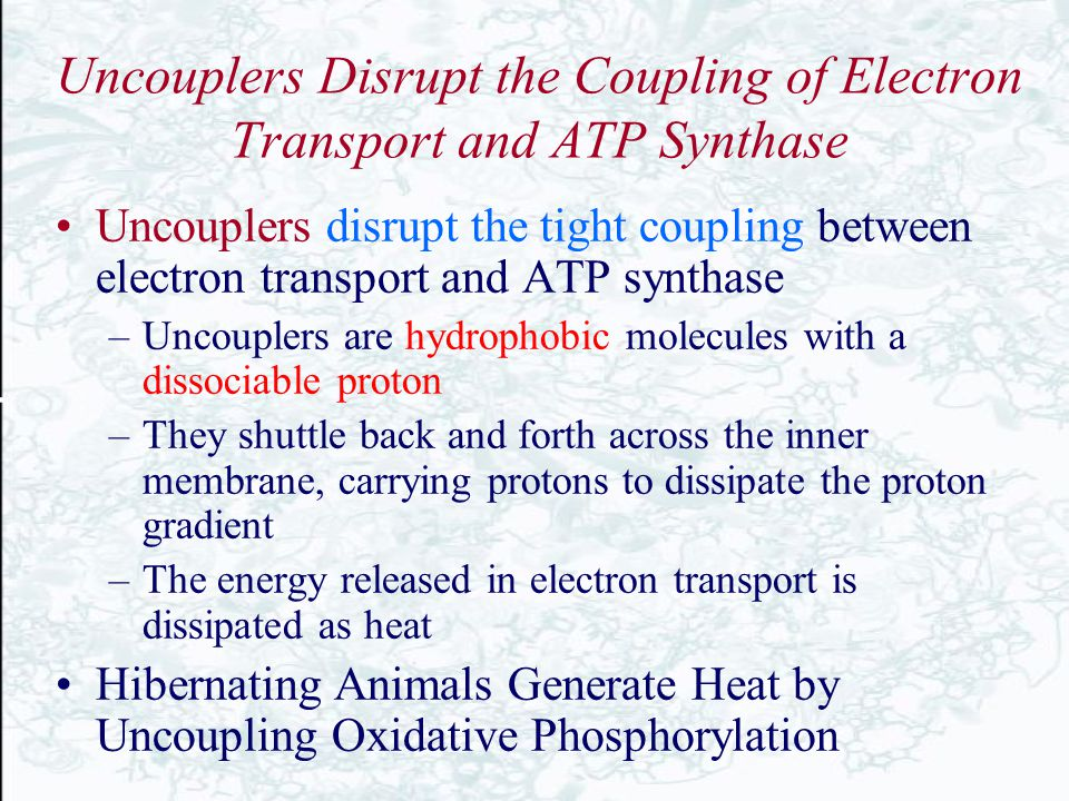 Uncouplers Disrupt the Coupling of Electron Transport and ATP Synthase