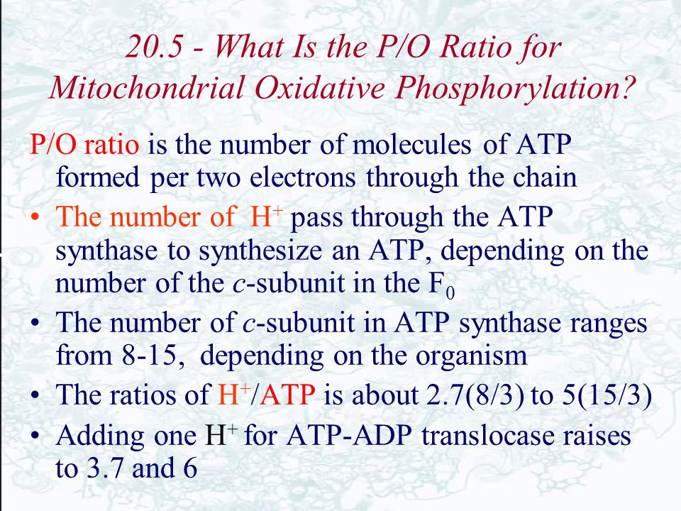 20.5 - What Is the P/O Ratio for Mitochondrial Oxidative Phosphorylation