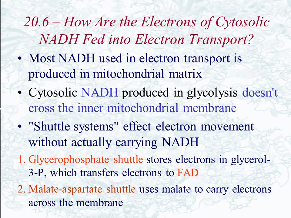 20.6 – How Are the Electrons of Cytosolic NADH Fed into Electron Transport