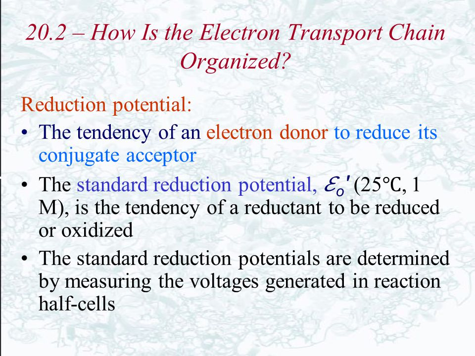 20.2 – How Is the Electron Transport Chain Organized