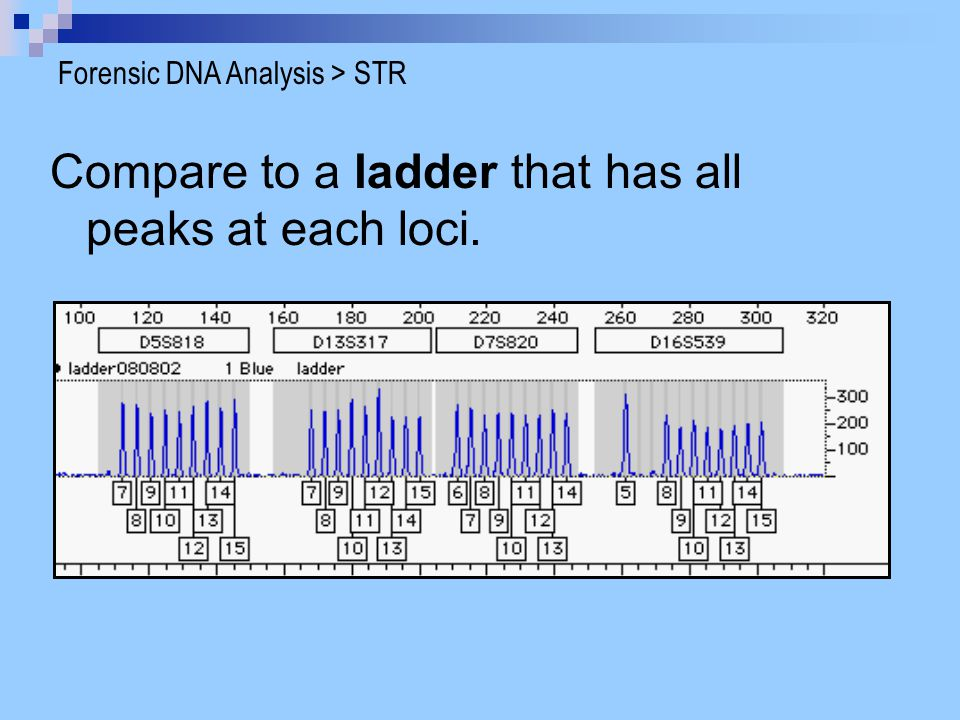 Compare to a ladder that has all peaks at each loci.