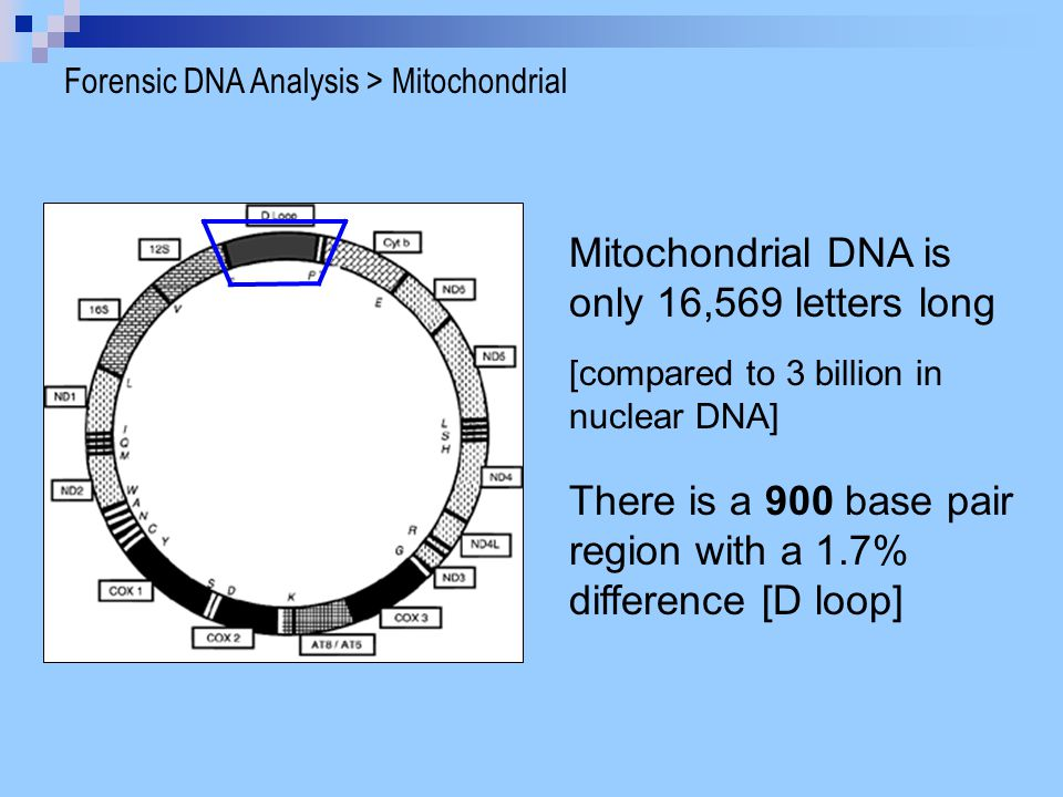 Mitochondrial DNA is only 16,569 letters long