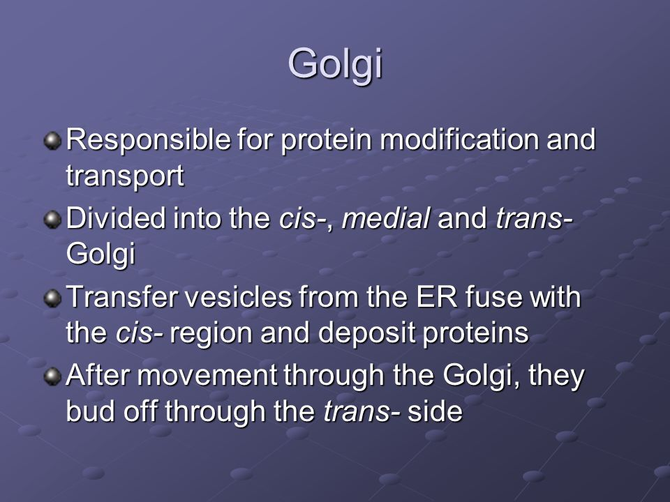 Golgi Responsible for protein modification and transport
