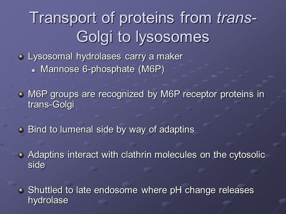Transport of proteins from trans-Golgi to lysosomes