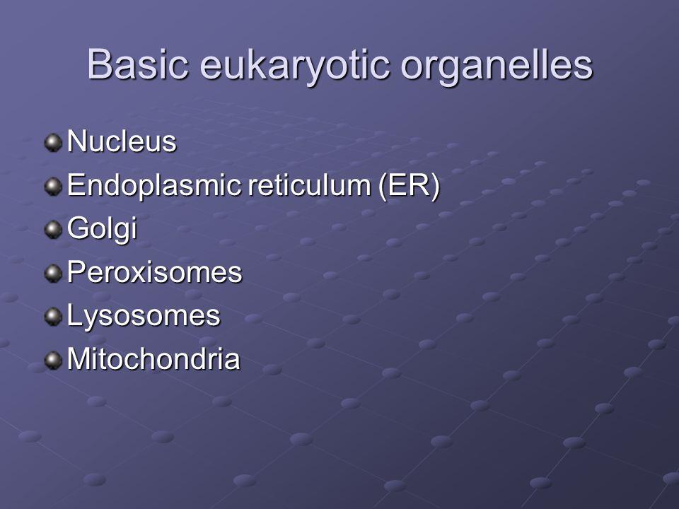 Basic eukaryotic organelles