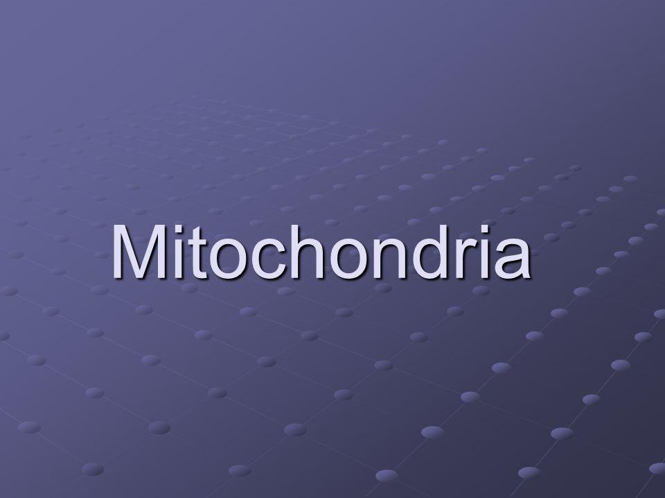 Mitochondria