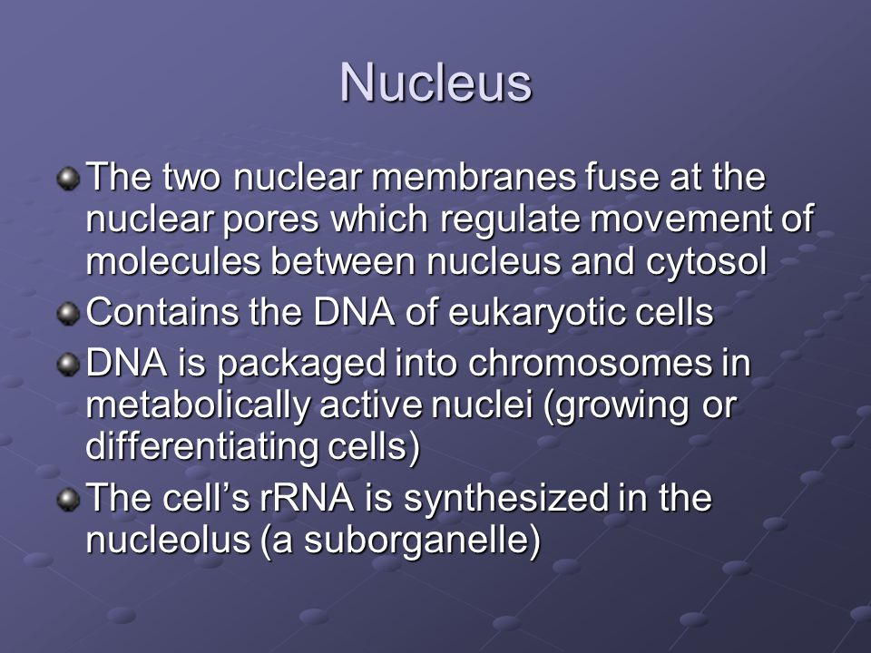 Nucleus The two nuclear membranes fuse at the nuclear pores which regulate movement of molecules between nucleus and cytosol.