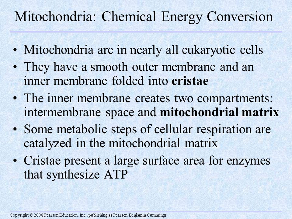 Mitochondria: Chemical Energy Conversion