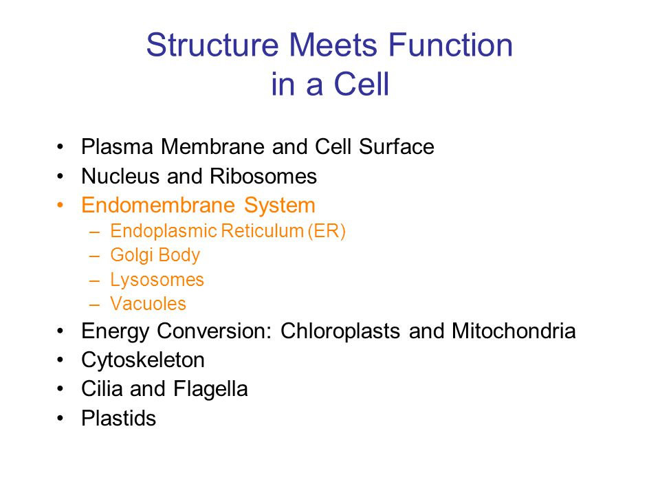 Structure Meets Function in a Cell