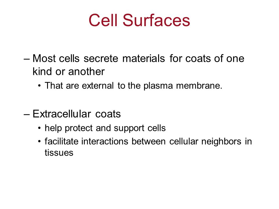 Cell Surfaces Most cells secrete materials for coats of one kind or another. That are external to the plasma membrane.