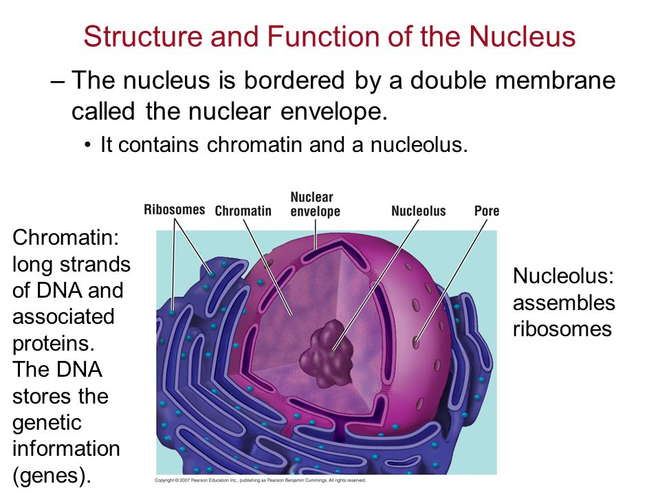 ch 4: a tour of the cell figure 4.6a. - ppt download, Human Body
