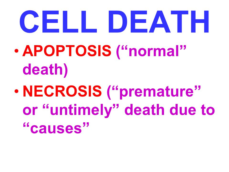 CELL DEATH APOPTOSIS ( normal death)