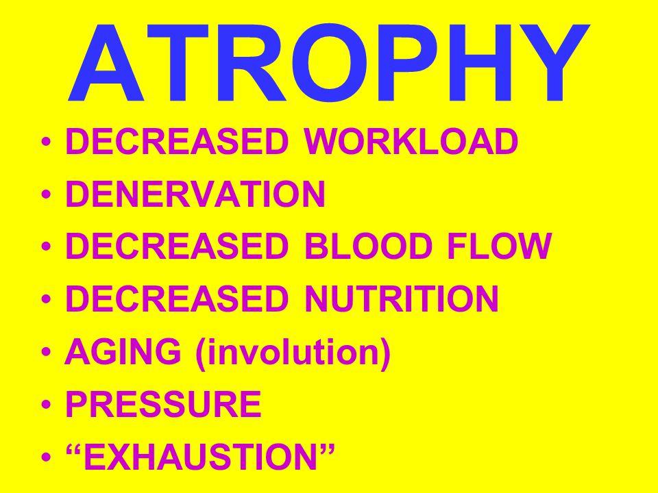 ATROPHY DECREASED WORKLOAD DENERVATION DECREASED BLOOD FLOW