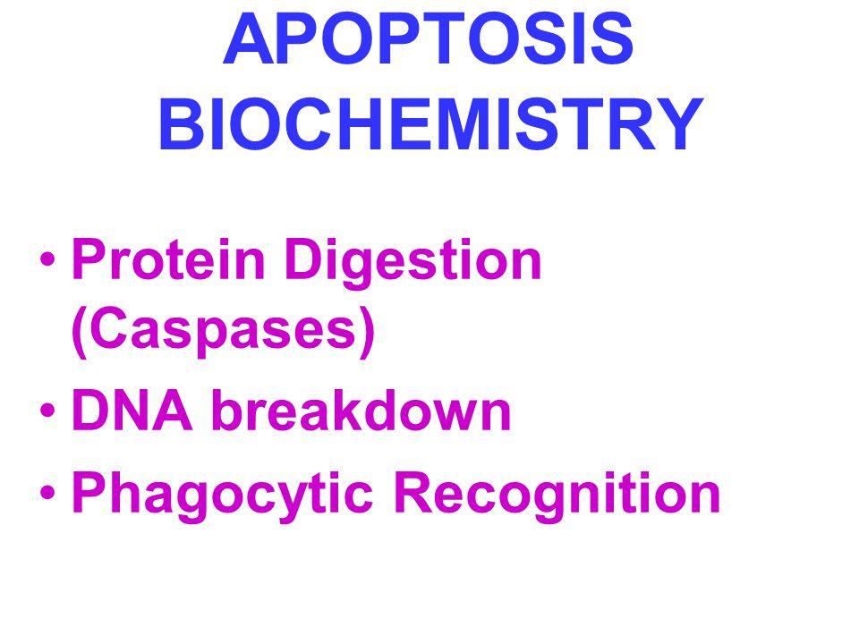 APOPTOSIS BIOCHEMISTRY