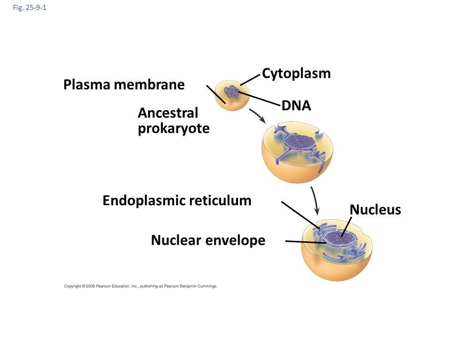 Endoplasmic reticulum Nucleus