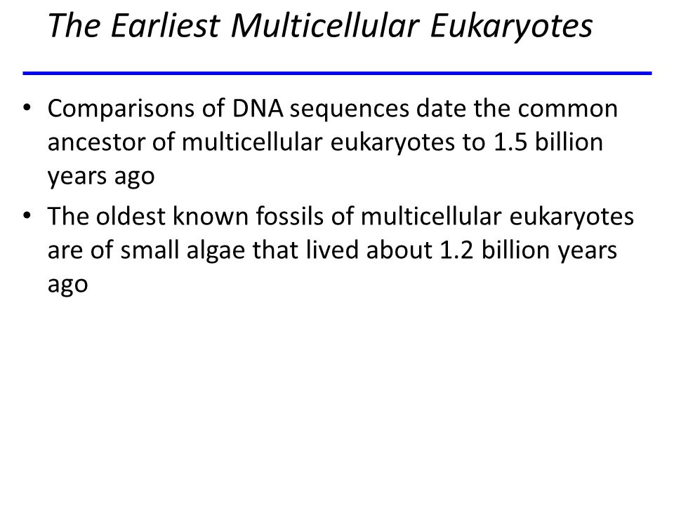 The Earliest Multicellular Eukaryotes