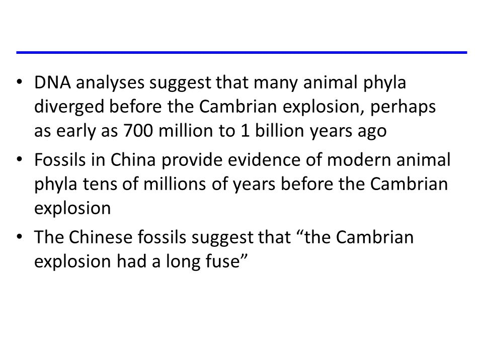 DNA analyses suggest that many animal phyla diverged before the Cambrian explosion, perhaps as early as 700 million to 1 billion years ago